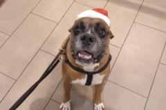 Ziggy navideño