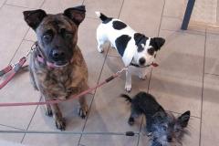 Fiona, Bora i Pirri